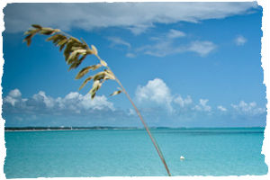 Thumbnail image for Practical Tips for Planning a Tropical Trip